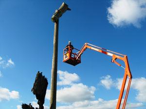 Tim Burnard carrying out nest maintenance in June 2010.